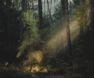 forest, light, and photography image