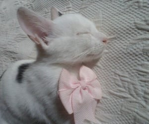 cat, cats, and pink image