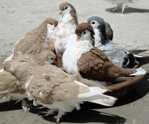 bird, brown, and aesthetic image