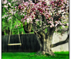 swing, tree, and blossom image