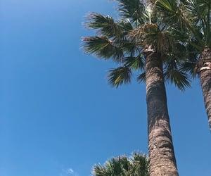 palms, palmtrees, and sea image