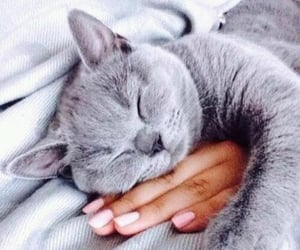 cat, hand, and kitty image