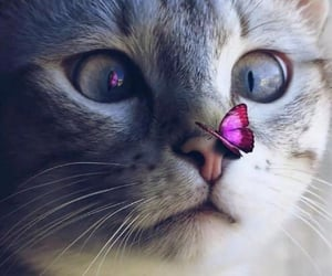 cat, animals, and photography image