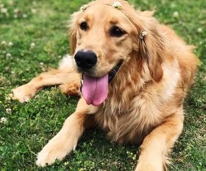 dog, doggies, and dogs image