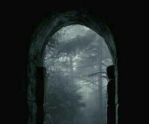 dark, forest, and Darkness image