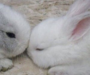 bunny, baby, and pink image