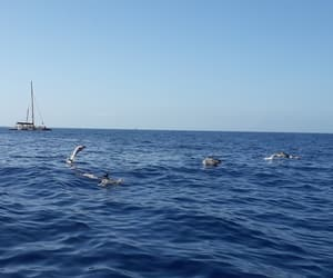 Atlantic, dolphin, and dolphins image