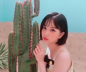 asian, korean, and cactus image