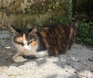 animals, autoral, and cat image