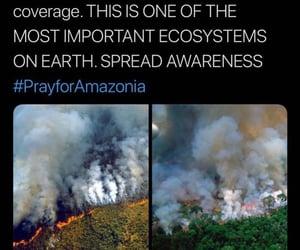 amazonia, brazil, and fire image