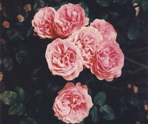 beautiful, floral, and pink image