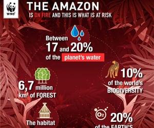 brasil, brazil, and climate change image