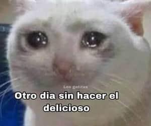 cry, delicioso, and gatito image