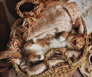 animal, kittens, and animals image