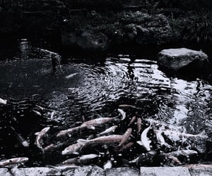 aesthetic, theme, and dark image