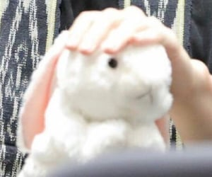 bunny, details, and kpop image