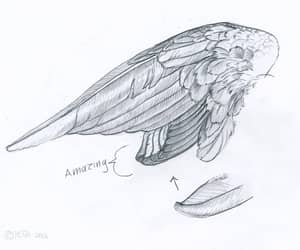wing and wings image