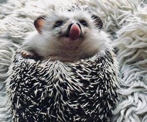 animal, animals, and hedgehog image