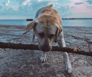 aesthetic, dog, and travel image