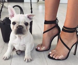 fashion, dog, and shoes image