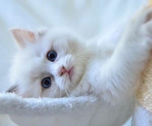 cat, kitty, and cute image