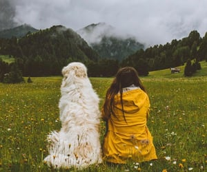 air, countryside, and dog image