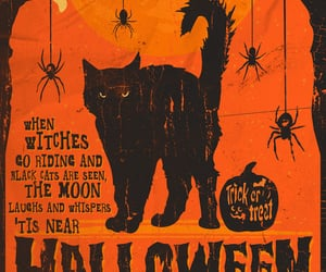 Halloween, black cat, and cat image