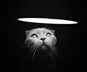 animals, cats, and b&w image