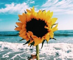 sunflower, flowers, and beach image