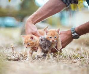 cats, grass, and kittens image