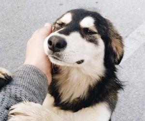 such a good boy 😘