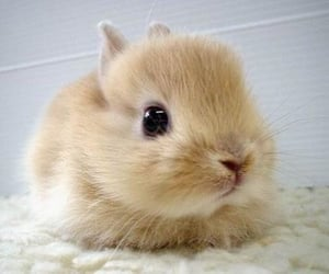 adorable, bunny, and fluffy image