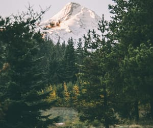 autumn, mountain, and forest image