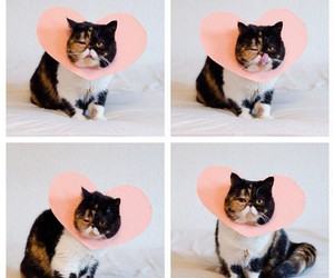 cat, heart, and pink image
