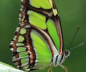 butterfly, Animales, and belleza image