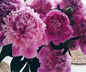 природа, розы, and цветы image