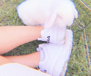 bunny, shoes, and theme image
