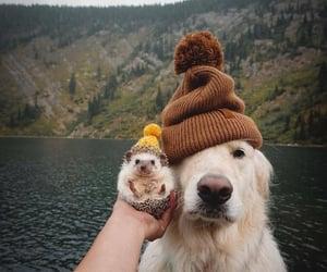 dog, animal, and hedgehog image