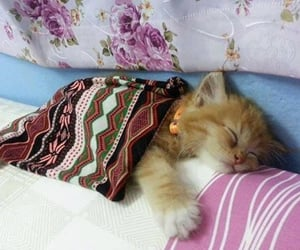Time for bed😻