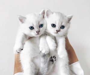 Miaouu 🐱