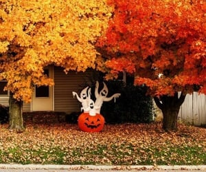 leaves, pumpkin, and autumn image