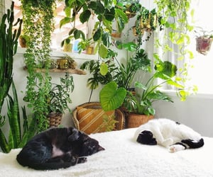 apartment, bedroom, and cat image