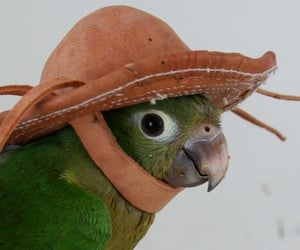 bird, parrot, and animals in hats image