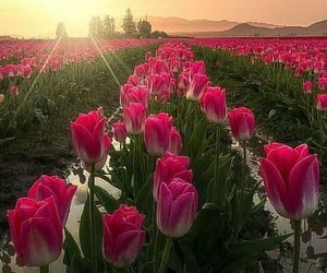belleza, campo, and flores image