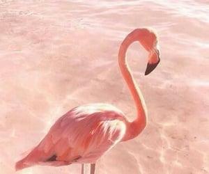 aesthetic, animal, and bird image