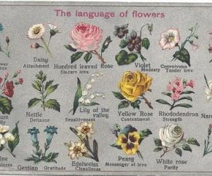 flowers, rose, and language image