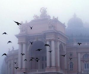 bird, pale, and fog image