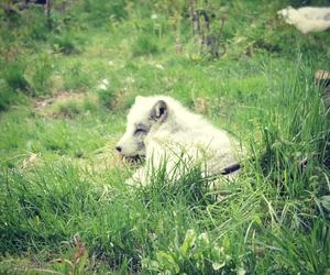 animal, beautiful, and fence image