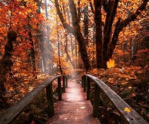 fall, autumn, and beautiful image