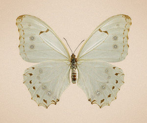 butterfly, vintage, and lovely image